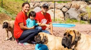 Doggie Day Care Oahu